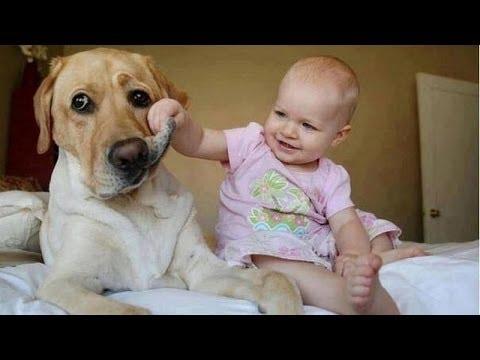 video di cani e bambini divertenti e combina guai - spassoso