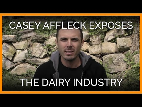Exposes Mutilation of Cows in Dairy Industry (PETA Ad)