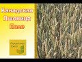 Семена канадской пшеницы-двуручки Леннокс. 1 репр.