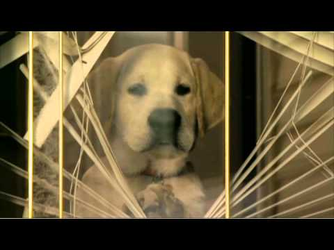 MARLEY & ME: THE PUPPY YEARS Clip: I'm Marley. On DVD NOW.