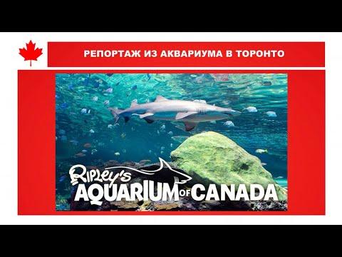Торонто. ТВ. Аквариум. Ripleys Aquarium of Canada