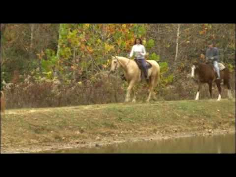 THE BEST HORSEBACK RIDING in THE USA (LakeGlendaleStables IL)