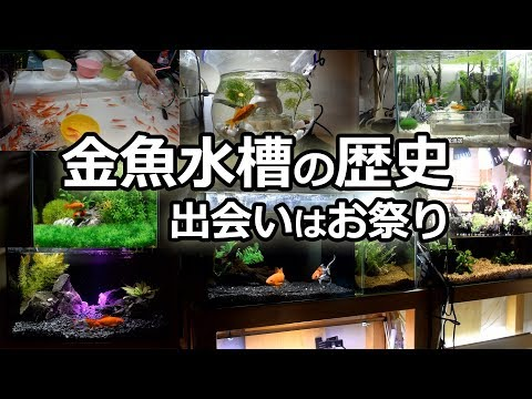 総集編!金魚水槽移り変わり お祭りの金魚と朱文金