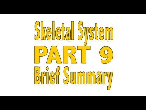 skeletal renewal - Shaun Allen Films: The Educational Series presents The Human Body. This is Part 9 of a 9 part series on the Skeletal System. Today, we are giving a brief sum...