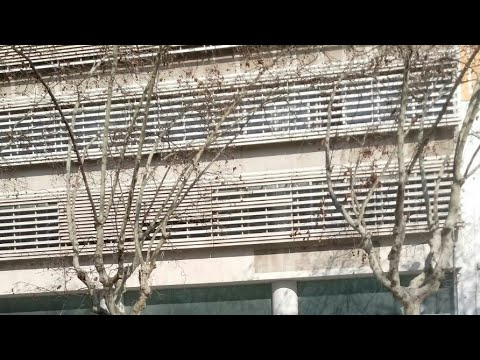 CRIE 930, JINCHO DKC, DIRTY PORKO 930 Y CALERO LDN - EL TRIANGULO | Prod. ZULE BEATS (видео)