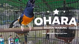 Video BRANDY WATCH : GOPRO - Ohara Is Back ! Penampilan Pertama Selesai Mabung Bersama AK47 Team MP3, 3GP, MP4, WEBM, AVI, FLV Februari 2019