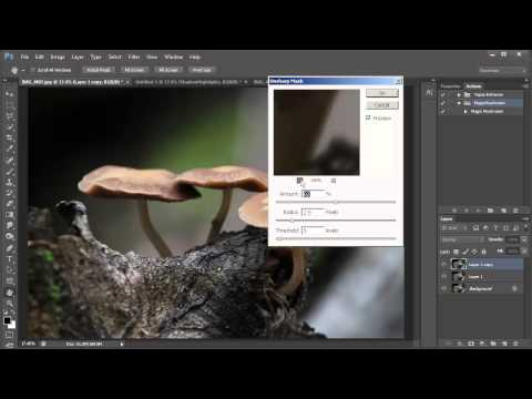 Magic Mushroom Photoshop Action by Captain Kimo