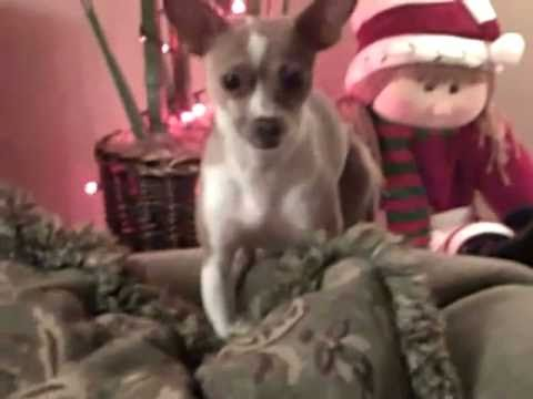 Grandma Got Ran Over By a Reindeer Chihuahua