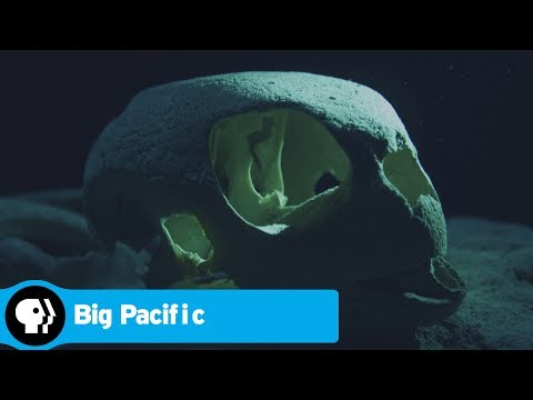 BIG PACIFIC | Turtle Graveyard | PBS