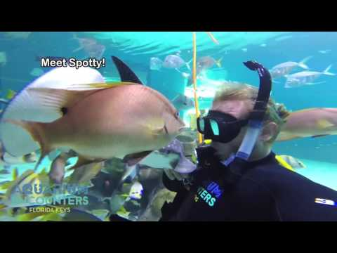 Aquarium Encounters - Key West Adventures_Akvárium