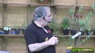 Markus redet über Malini Bäume (Englisch)