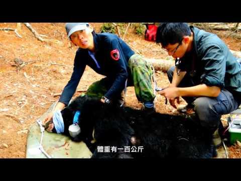 黑熊媽媽 黃美秀