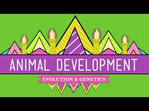 Tier-Entwicklung: Wir sind einfach Röllchen - Crashkurs Biologie Nr. 16