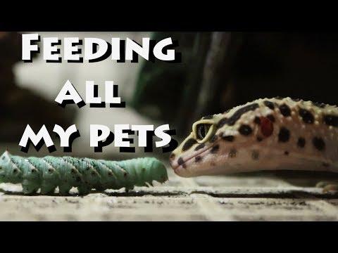 Feeding All My Pets!