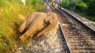 Video Train Hits Elephant MP3, 3GP, MP4, WEBM, AVI, FLV Mei 2017