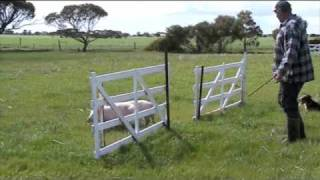 Strathalbyn Australia  City new picture : Supreme Australian working sheepdog championships - Strathalbyn 2009