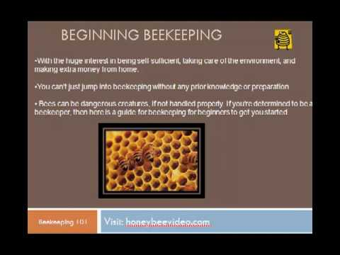 Beekeeping for beginners – a quick guide