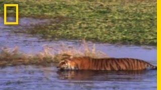 Video JAWS vs. CLAWS | National Geographic MP3, 3GP, MP4, WEBM, AVI, FLV Juni 2017