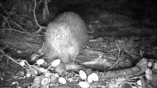 Wildlife Trail Camera - 20.8.2016