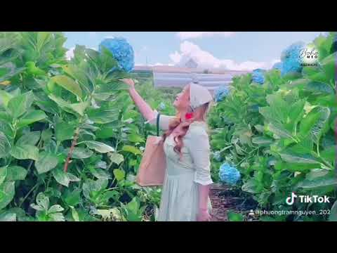Lạc vào vườn hoa cẩm tú cầu thì mặc gì cho ngầu?!