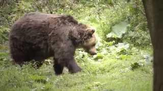 Video O zúrivom medveďovi a hubároch by MENGAart MP3, 3GP, MP4, WEBM, AVI, FLV Oktober 2017