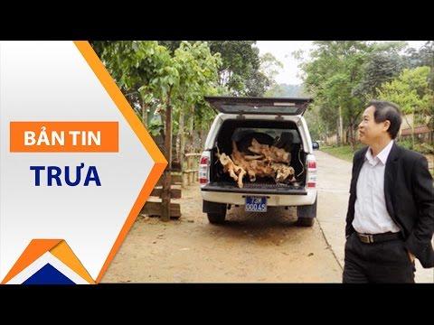 Quảng Bình: 'Sếp' huyện dùng xe công chở gỗ lậu | VTC - Thời lượng: 56 giây.