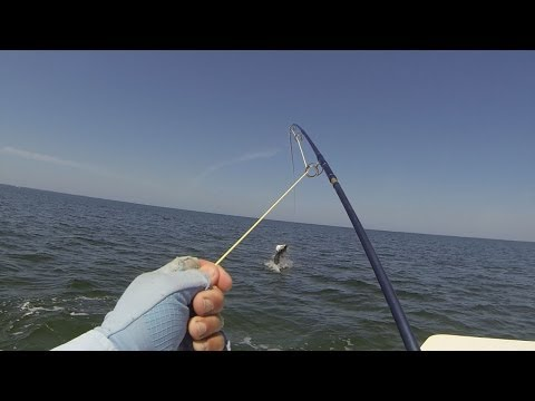 Saltwater Fly Fishing HD 720p