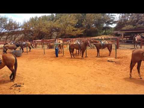 Kauai Horse back ride.