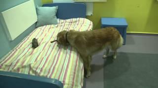 ROYVON DOG HOTEL - Merthyr Tydfil South Wales
