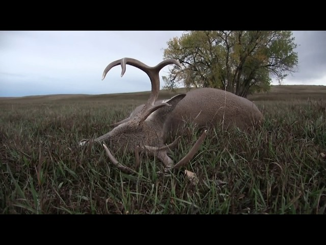 SD Archery Season Crossbow river bottom Whitetail hunt with Routier Outfitting