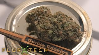 Gorilla Cookies Testing Tuesday by Urban Grower