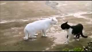 WhatsApp Videos::Kung Fu Cat