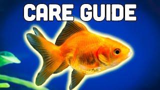 Fancy Goldfish Care Guide by Aquarium Co-Op