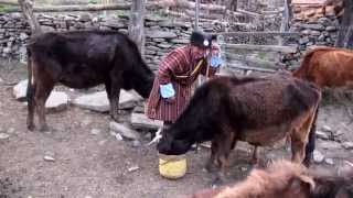 Bhutan Ura small Village in the Bhumtang Region Daily Life and Monch Ceremony.