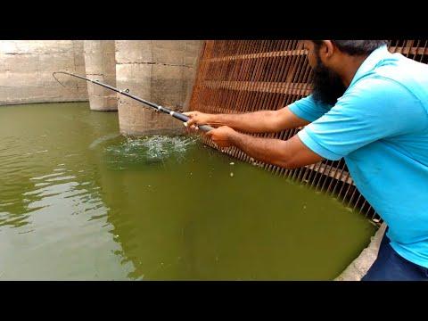 Fish Hunting  Black Rohu Fish catching  TIGGI GAL IN 3Hooks  silver carp Fish  Fishing