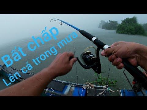 Điểm câu mới trúng bầy cá tra, cóc. Tắm luôn nguyên trận mưa và cái máy sợ mưa | Săn bắt SÓC TRĂNG | - Thời lượng: 26:51.