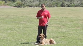 Cures for Barking Dogs : Dog Behavior&Training