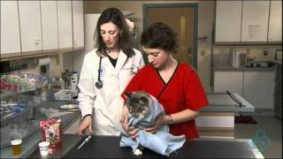 Willard Vet Tutorial: Giving your cat pills made easy