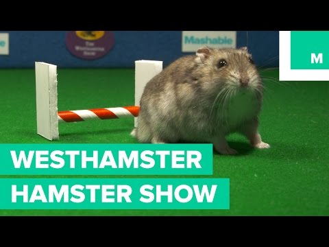 The Westhamster Hamster Show