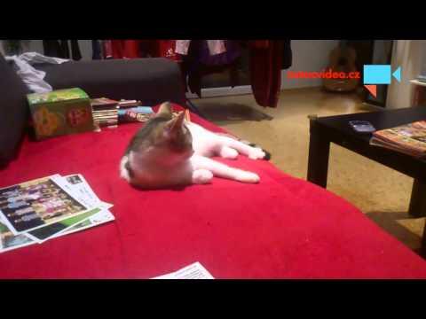 Kočka kouká na zpravy