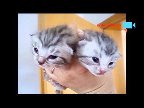 Útulkoví drobečci budou na Primě :-)