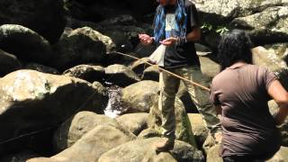 Watch video to find out about our nature and community learning trips with students and youth to different places in Northeast India to learn about environment and its issues.