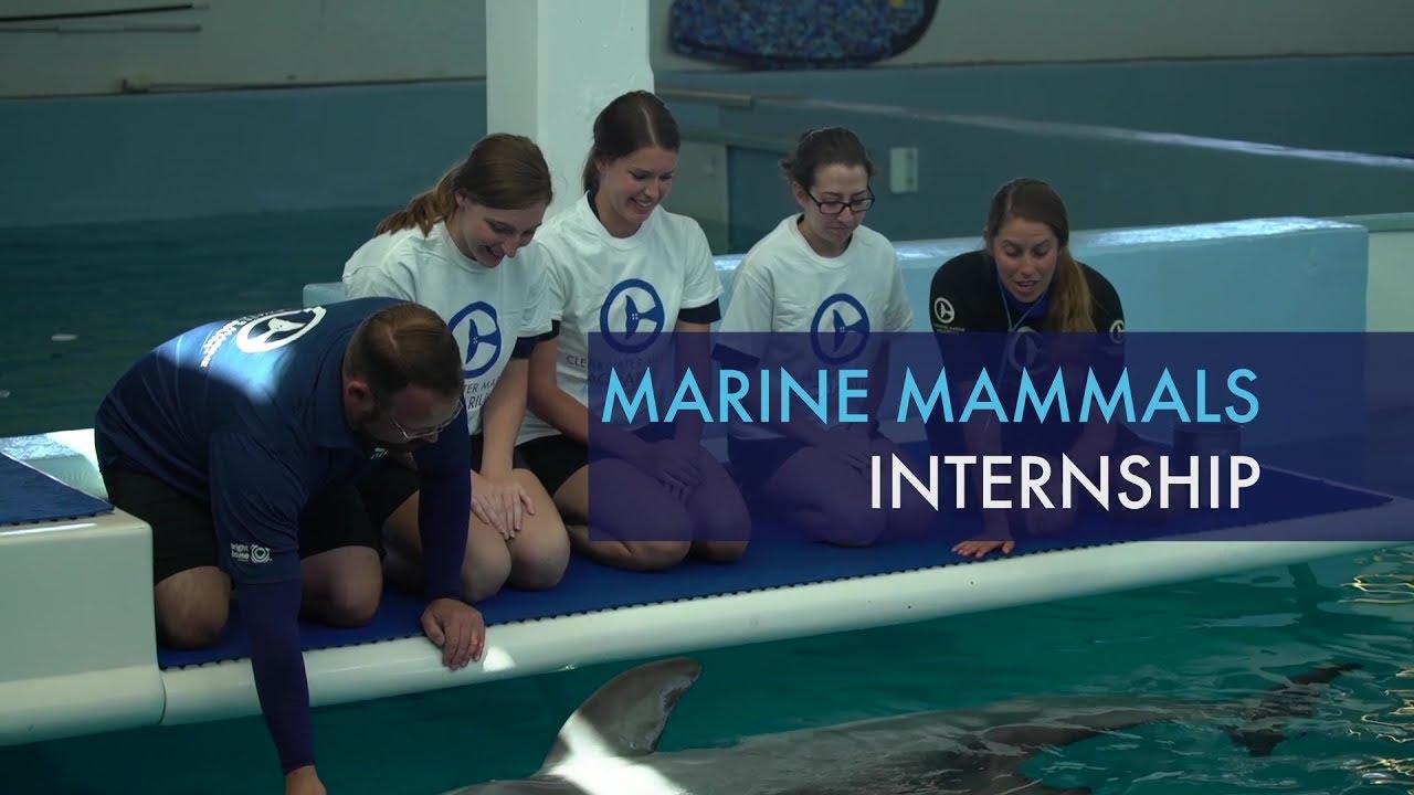video gallery clearwater marine aquarium