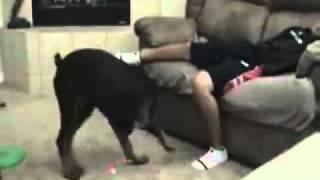 Dog Lazer Prank!
