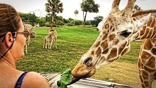29.04.2014: Busch Gardens Tampa Soundtrack: Earl Klugh: Tropical Legs from