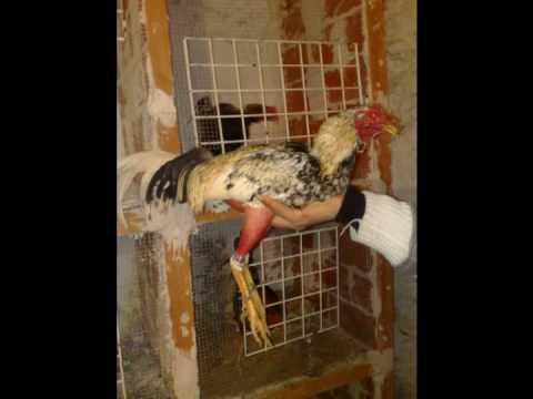 Venta de gallos (valencia)