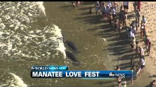 WEBCAST: Manatee Love Fest