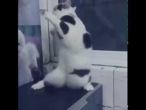 kot-tanczacy-do-muzyki-trance