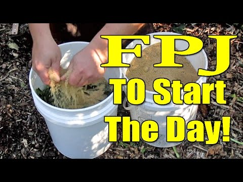 Easy Homemade Fertilizer Using Weeds & Brown Sugar | Fermented Plant Juice aka FPJ