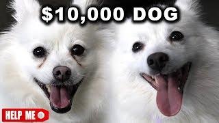 Video $10,000 DOG VS. $1 DOG MP3, 3GP, MP4, WEBM, AVI, FLV November 2017